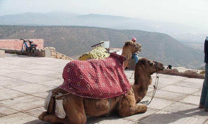 Pärnumaa Kodukant sõidab Marokosse meeskonnatööd harjutama